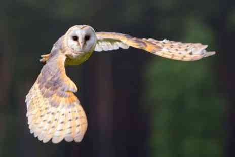 Fens Falconry - Falconry or Owl Experience With Lunch  - Save 51%