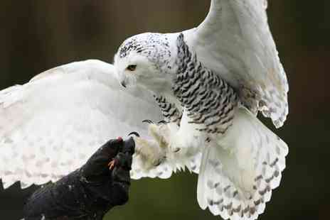 Birds of Prey Centre - Half Day Owl Flying Experience - Save 76%