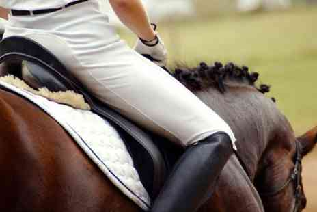 Wern Trekking and Riding Centre - Horse Riding Two Hour Trek or Hack For One  - Save 60%