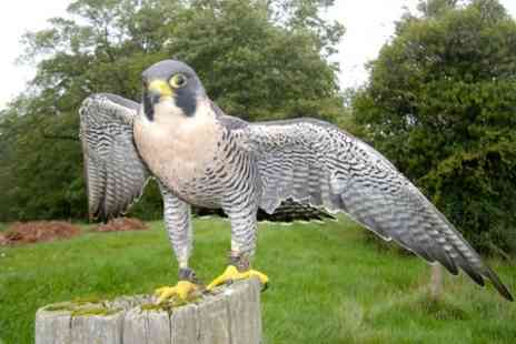 S & D Falconry - Two Hour Experience For One - Save 73%