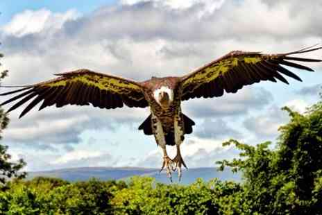 World of Wings -  Entry For Two in Scotlands largest bird of prey centre - Save 48%
