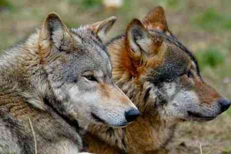 Anglian Wolf Society - Half Day Experience - Save 64%