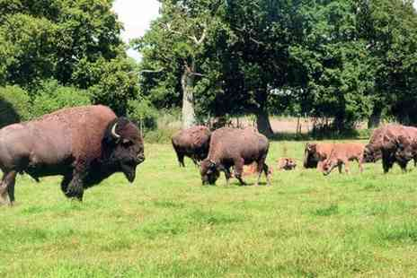 Bush Farm Bison Centre - Bison farm with lakes and 30 acres Entry for Two - Save 50%