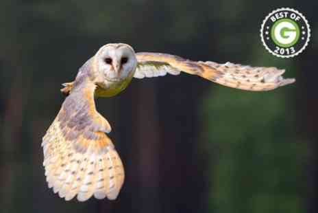 York Bird of Prey Centre - Entry to the centre for the whole day experience lasts half a day - Save 60%