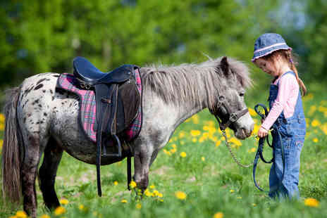 Hooves and Paws Equestrian Centre - Miniature Horse and Pony Party for Six  - Save 66%