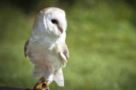 North Somerset Bird of Prey Centre - Birds of Prey Experience with Cream Tea for One Person - Save 58%