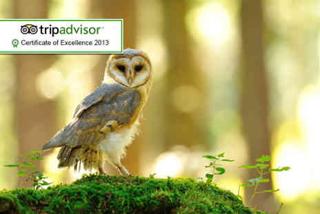 The Rutland Falconry and Owl Centre - Two hour hawk or owl experience - Save 75%