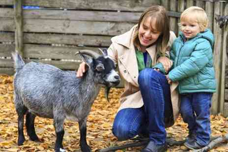 Oak Farm Park -  Animals include Shetland ponies Entry For Two Adults and Two Children  - Save 50%