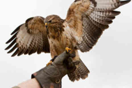 Adventure 001 Aviation - Falconry and Bird Handling Experience for One - Save 51%