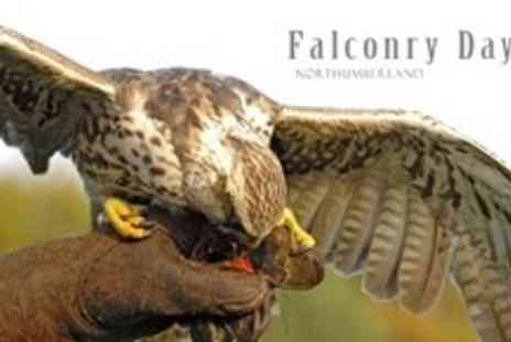 Falconry Days - Three Hour Falconry Experience For Two Adults and Two Children - Save 61%