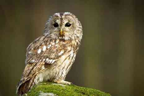 Birds of Prey Centre - Hhalf day owl experience for one person including cake and hot drink - Save 77%