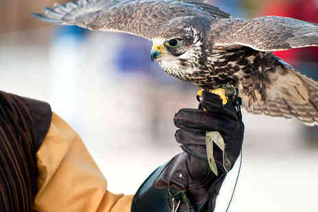 Arden Falconry - Half Day Falconry Experience for One - Save 75%