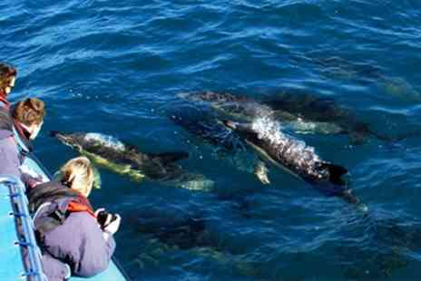 Orca Sea Safaris -  Hour Dolphin Spotting Marine Safari - Save 41%