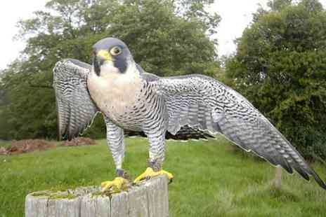 S & D Falconry - Falconry Experience - Save 73%