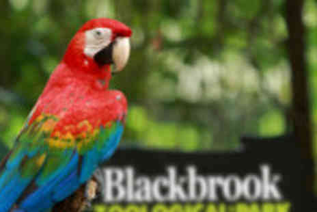 Blackbrook Zoological Park - Family ticket to the zoo - Save 63%