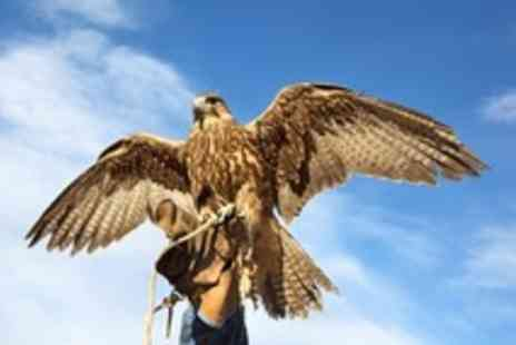World of Wings - Two hour falconry experience for One  - Save 50%