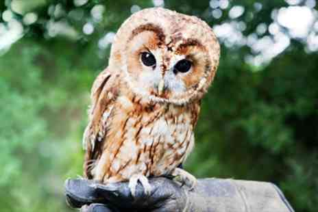 Lightwater Valley Falconry - Owl Handling Experience in Rural Yorkshire - Save 58%