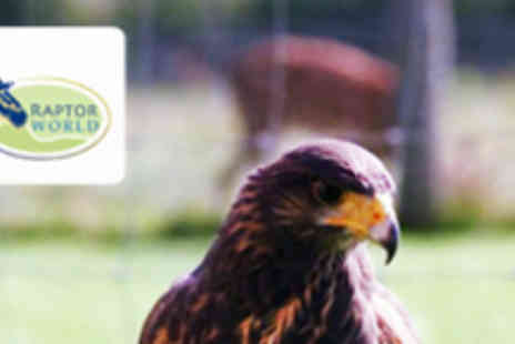 Raptor World - Two Hour Birds of Prey Handling Experience - Save 60%