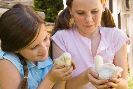 Lower Drayton Farm - Spring Term Entry for One Adult and One Child - Save 57%
