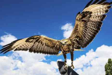 White Falconry - Two Hour Falconry Experience - Save 51%