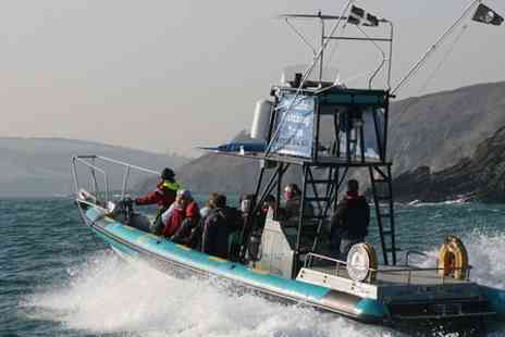 Orca Sea Safaris -  Two Hour Coastal Wildlife Trip - Save 37%