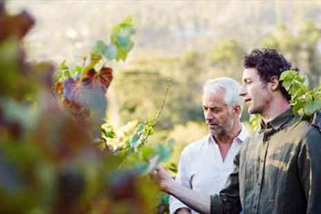 Sedlescombe Organic Vineyard -  Award Winning Vineyard Tour & Tasting for 2 - Save 41%