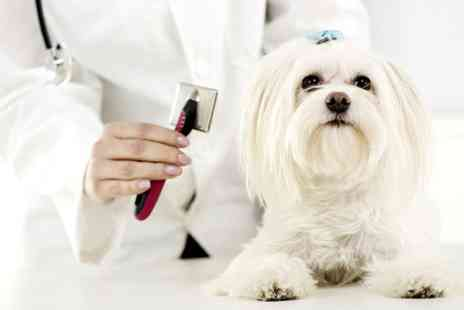 Gurrs 2 Purrs - Dog Grooming - Save 52%