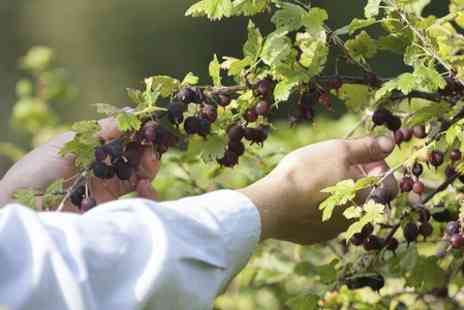 Woodborough Garden Centre - Gooseberry Picking For Four - Save 60%