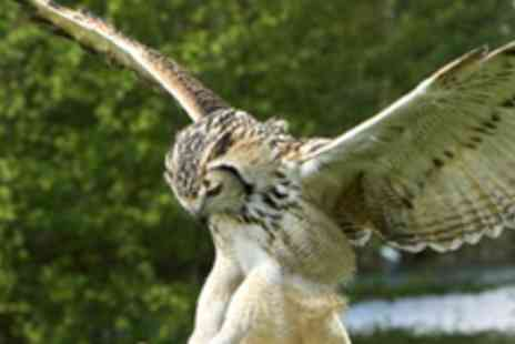 The Birds of Prey Centre - Half Day Bird of Prey and Falconry Experience - Save 77%