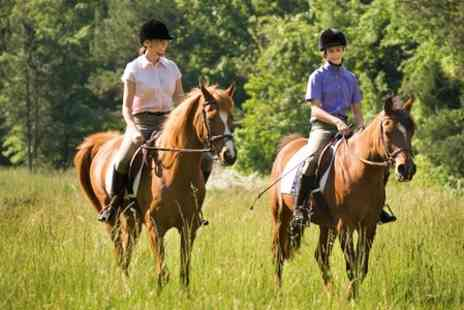 High beech riding school - Two Hour Woodland Horse Riding Experience  - Save 64%