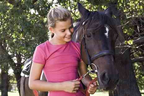 Mayfair Farm - Horse Riding Experience For One  - Save 59%