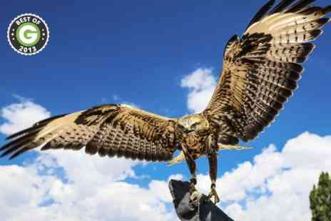Falconry Experiences - Half Day Falconry Experience - Save 62%