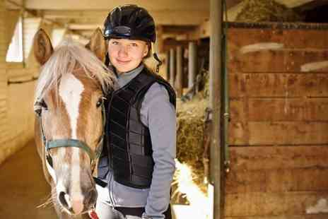 Holly Equestrian Centre - Pony Experience With Grooming and Riding  - Save 50%
