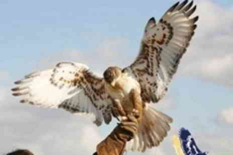Raptor World - Two Hour Bird of Prey Experience With Handling, Flying and Demonstration - Save 60%