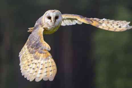 Fens Falconry - Falconry or Owl Experience  - Save 50%
