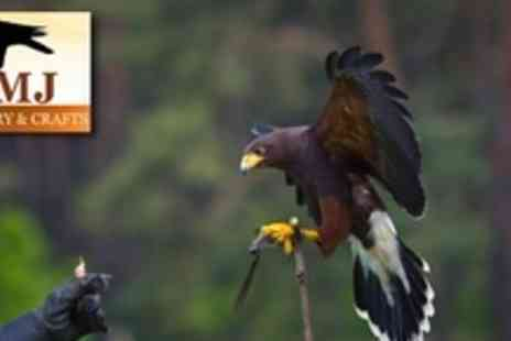 SMJ Falconry - Two Hour Falconry or Owl Experience - Save 65%