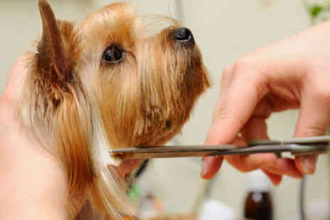 LD Learning - Online dog grooming course - Save 50%