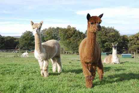 Mayfield alpacas - Party for Up to Ten Children With Food,Games and Farm Access  - Save 63%
