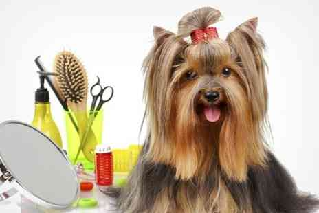 Grooming Marvellous - Dog Grooming With Wash and Nail Clipping - Save 50%