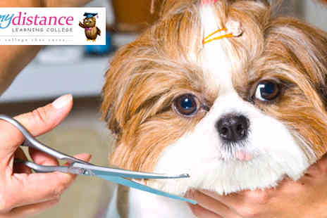 My Distance Learning College - Dog Grooming Online Course - Save 92%