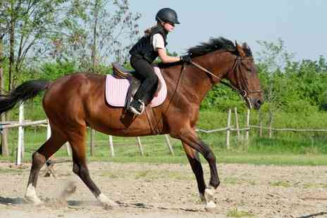 Upper Hattons Stables - Half day horse experience Plus riding lesson - Save 58%