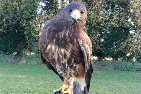Fens Falconry - Falconry Taster Experience For One  - Save 50%