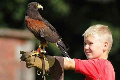 Lakeland Bird of Prey Centre - Entry and Food For Two  - Save 50%