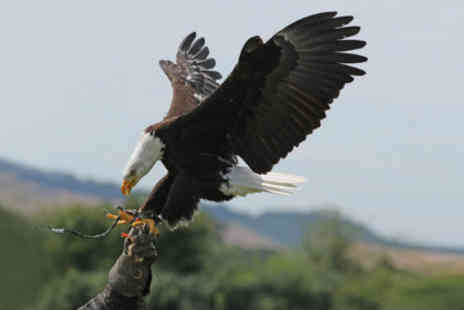 Raptor World - £24 for a two-hour bird of prey handling session worth £60 at the award-winning Raptor World - Save 60%