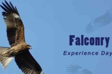 Chris Miller Falconry Experiences - Three Hour Falconry Experience With Pub Lunch - Save 78%