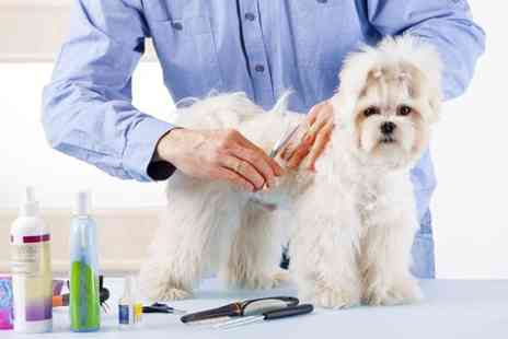 Lancashire K9 - Dog Grooming  - Save 50%