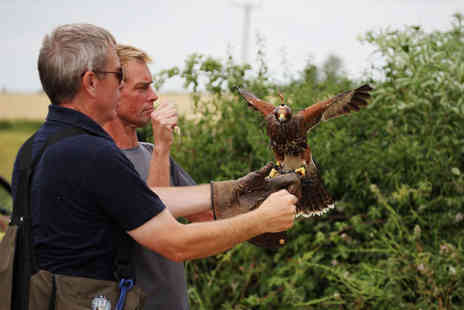The Falconry School - Three Hour Falconry Experience with Refreshments for One - Save 76%