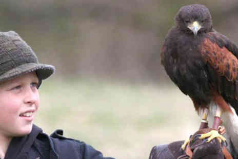 Lakeland Bird of Prey - Tickets to Lakeland Bird of Prey Centre  - Save 58%