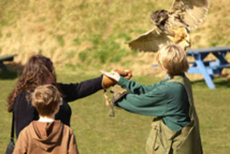 Raptor World - Beak to Beyond Two Hour Bird Handling Experience - Save 62%