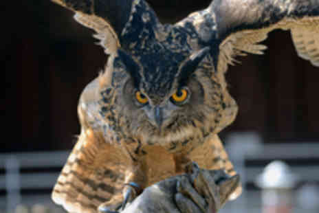 Talon Falconry - Up Close Owl Handling Experience - Save 58%